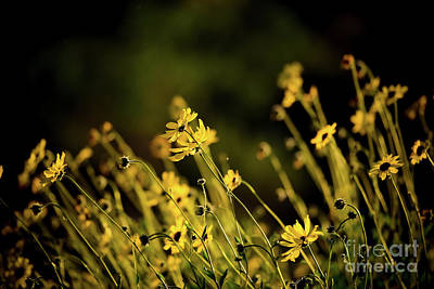 Art Print featuring the photograph Wild Spring Flowers by Kelly Wade