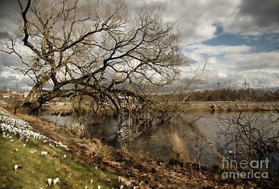 Landscape Photograph - Wild Spring Tree by Alison Gunn