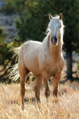 Photograph - Wild Stallion by Athena Mckinzie