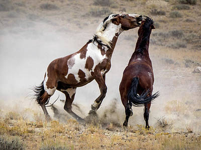 Photograph - Wild Stallion Battle - Picasso And Dragon by Nadja Rider