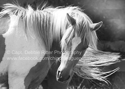 Photograph - Wild Stallion Courtneys Boy by Captain Debbie Ritter