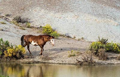 Photograph - Wild Stallion Of Sand Wash Basin, Raindance by Nadja Rider
