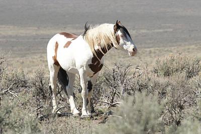 Photograph - Wild Stallion Shaman by Steve McKinzie