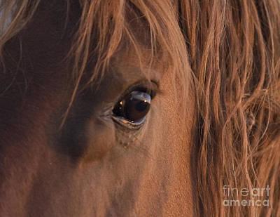 Horse Eye Photograph - Wild Stallion's Eye by Carol Walker
