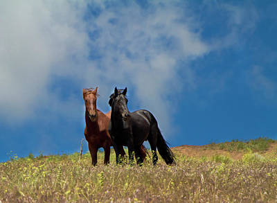 Photograph - Wild Stallions Together by Waterdancer