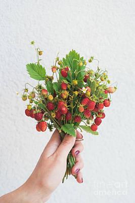Fruit Photograph - Wild Strawberries by Viktor Pravdica