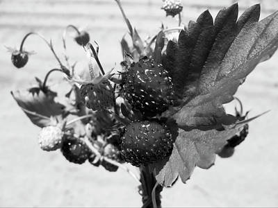 Flowers Photograph - Wild Strawberry, Black And White by Nat Air Craft
