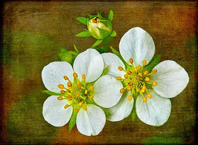 Photograph - Wild Strawberry Flowers On A Textured Background by Carolyn Derstine