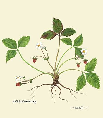 Painting - Wild Strawberry - Fragraria by Michael Earney