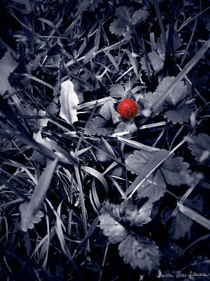 Photograph - Wild Strawberry by Iowan Stone-Flowers