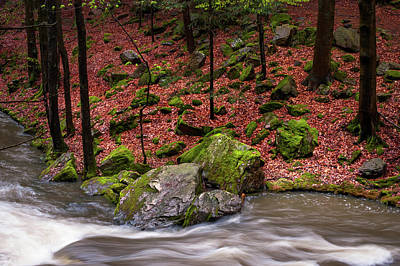 Photograph - Wild Stream In Spring Forest by Jenny Rainbow