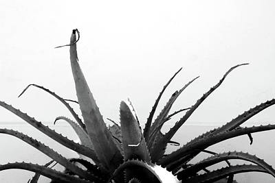 Black And White Art Mixed Media - Wild Succulent-  By Linda Woods by Linda Woods