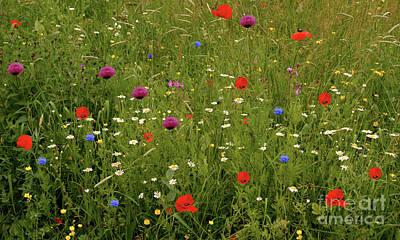 Photograph - Wild Summer Meadow by Baggieoldboy