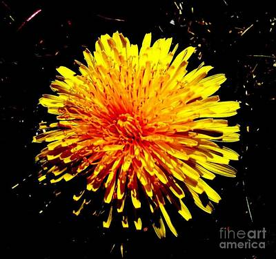 Dandelion Digital Art - Wild Sunburst by Marsha Heiken