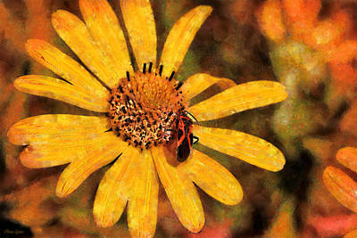 Photograph - Wild Sunflower And Boxelder Bug by Anna Louise
