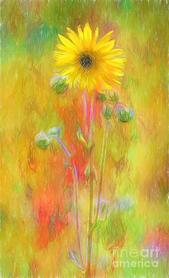 Photograph - Wild Sunflower Digitally Painted Photograph by Clare VanderVeen