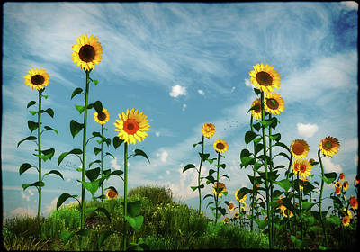 Digital Art - Wild Sunflower Patch... by Tim Fillingim