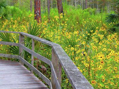 Photograph - Wild Sunflower Walk by Rosalie Scanlon