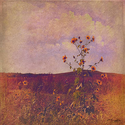 Photograph - Wild Sunflowers In The Prairie by Anna Louise