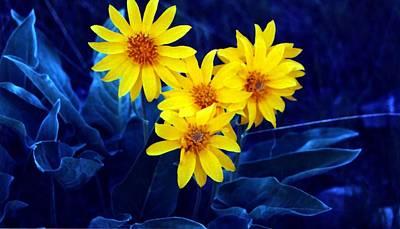 Wild Sunflowers Art Print by Tiffany Vest
