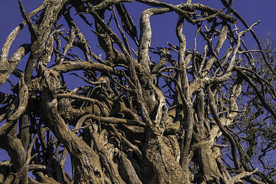 Tree Roots Photograph - Wild Tangled Tree Roots by Garry Gay