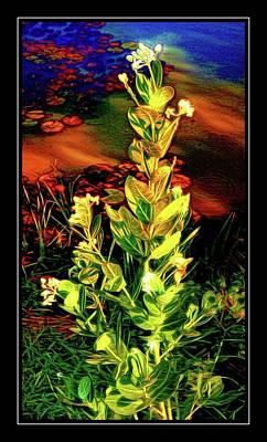 Photograph - Wild Thai Lake Jasminum - Photo Painting by Ian Gledhill