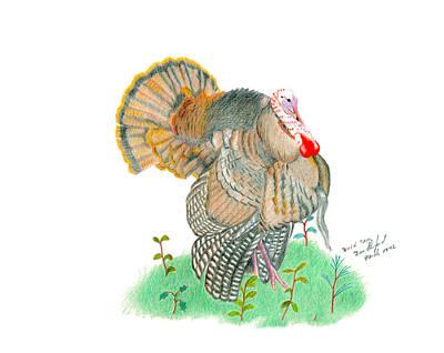Wild Turkey Drawing - Wild Tom by Daniel Shuford