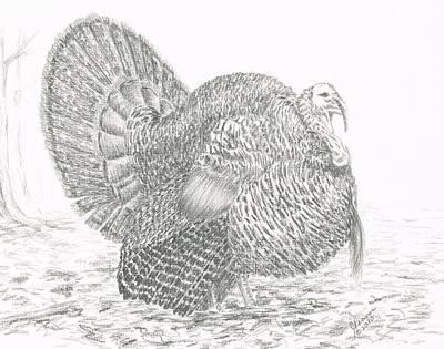 Wild Turkey Drawing - Wild Tom Turkey by Joann Renner