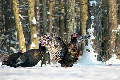 Photograph - Wild Turkey by Christina Rollo