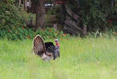 Art Print featuring the photograph Wild Turkey  by Christy Pooschke