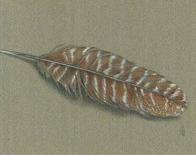 Wild Turkey Drawing - Wild Turkey Feather by Christel Huttar