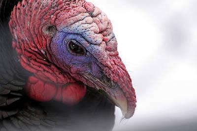 Wild Turkey Head Portrait Art Print by Laurie With