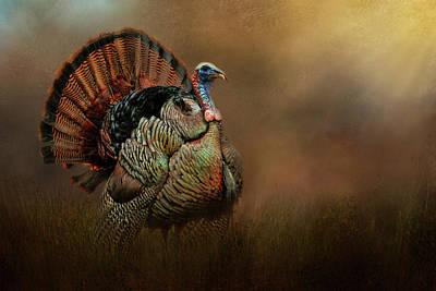 Wild Turkey In Wooded Retreat Art Print