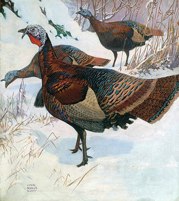 Painting - Wild Turkey by Lynn Bogue Hunt