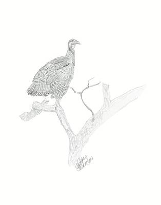 Drawing - Wild Turkey by Sara Stevenson