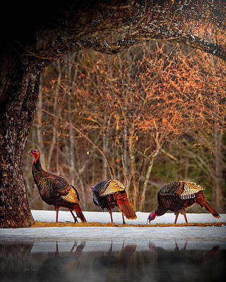 Photograph - Wild Turkey Winter by Bob Orsillo