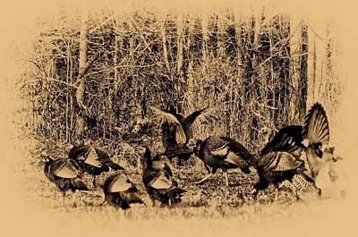 Wild Turkey Digital Art - Wild Turkeys by Bill Cannon
