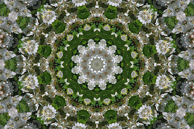 Photograph - Wild Tx Rose Kaleidoscope by Robyn Stacey