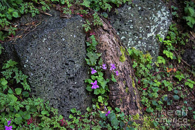Photograph - Wild Violets by Patricia Babbitt