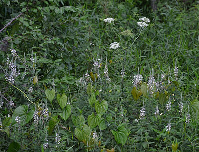 Photograph - Wild Weed Garden Of Flowers by rd Erickson
