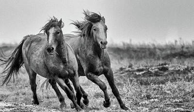 Photograph - Wild West Wild Horses by Kelly Marquardt
