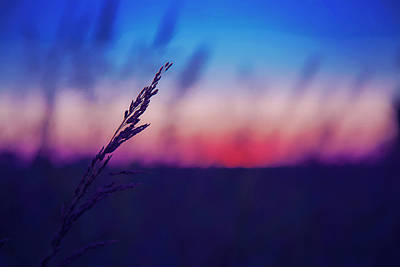 Photograph - Wild Wheat Silhouette In The Sunset by Toni Hopper