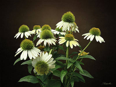 Digital Art - Wild White Coneflowers by IM Spadecaller