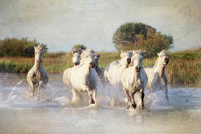 Photograph - Wild White Horses Of The Camargue Vl by Karen Lynch