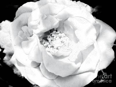 Wrap Digital Art - Wild White Rose by Marsha Heiken
