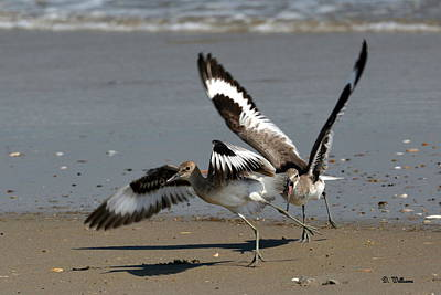Photograph - Wild Willet by Dan Williams