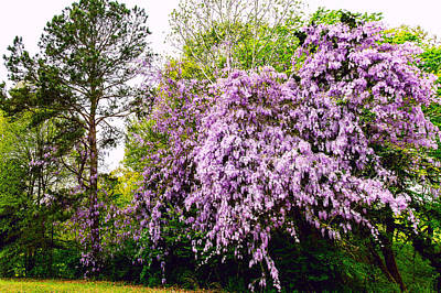 Photograph - Wild Wisteria - Floral Landscape by Barry Jones