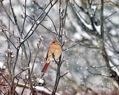 Photograph - Wild Wonder Of Winter by Kerri Farley