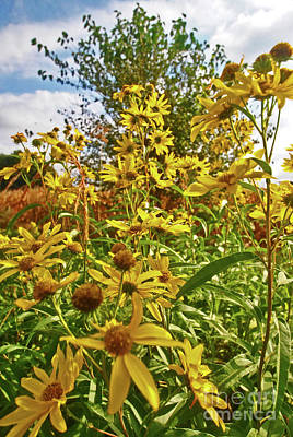 Photograph - Wild Yellow by George D Gordon III