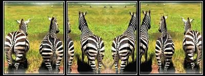 Photograph - Wild Zebras-triptych by Ericamaxine Price